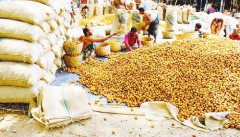 Bumper betel nut production promises profit
