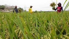 Boro farmers find govt's prices inadequate